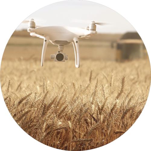 Especialización:  Agroforestal con drones